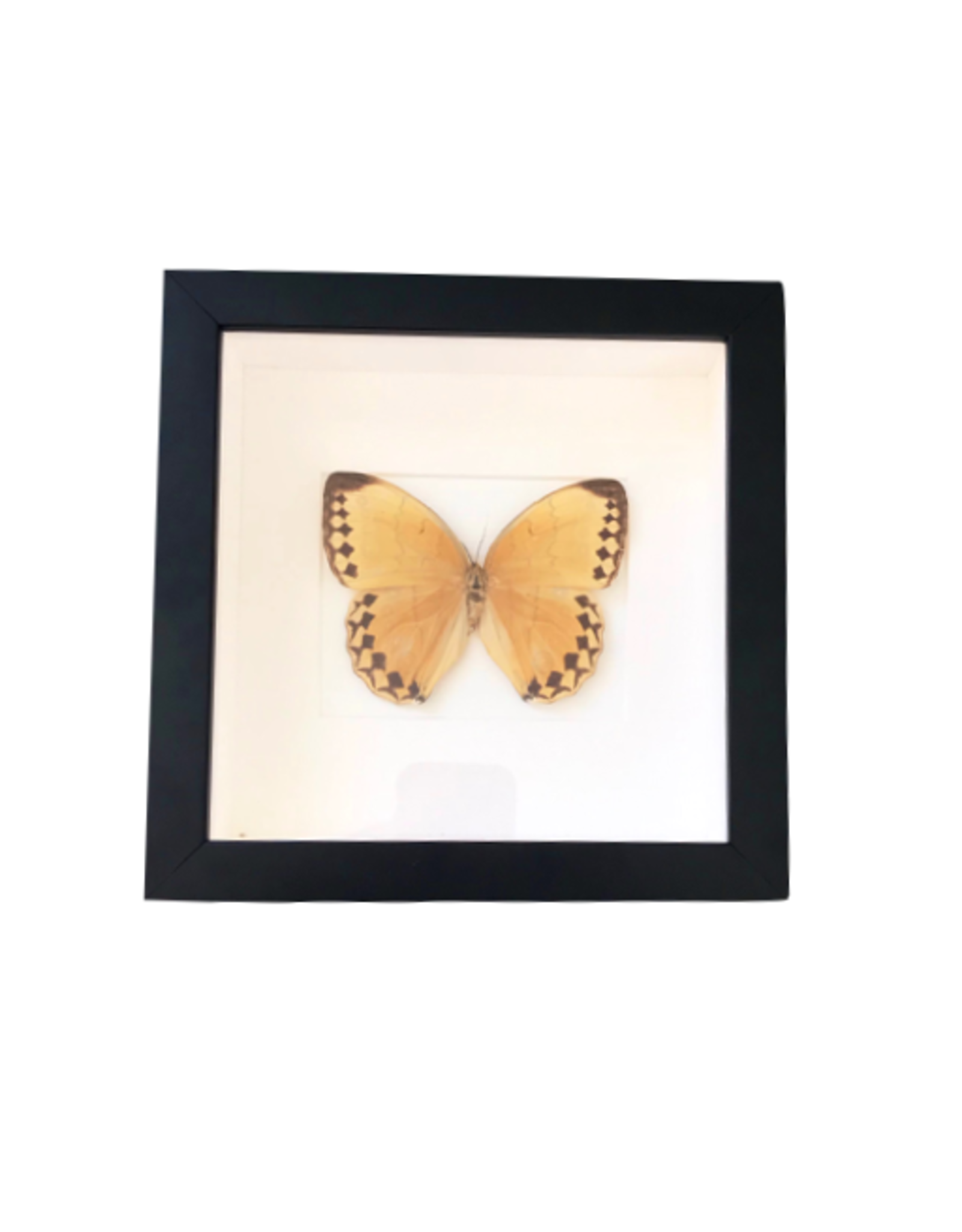 """Butterfly Artwork with Frame (8"""" x 8"""")"""