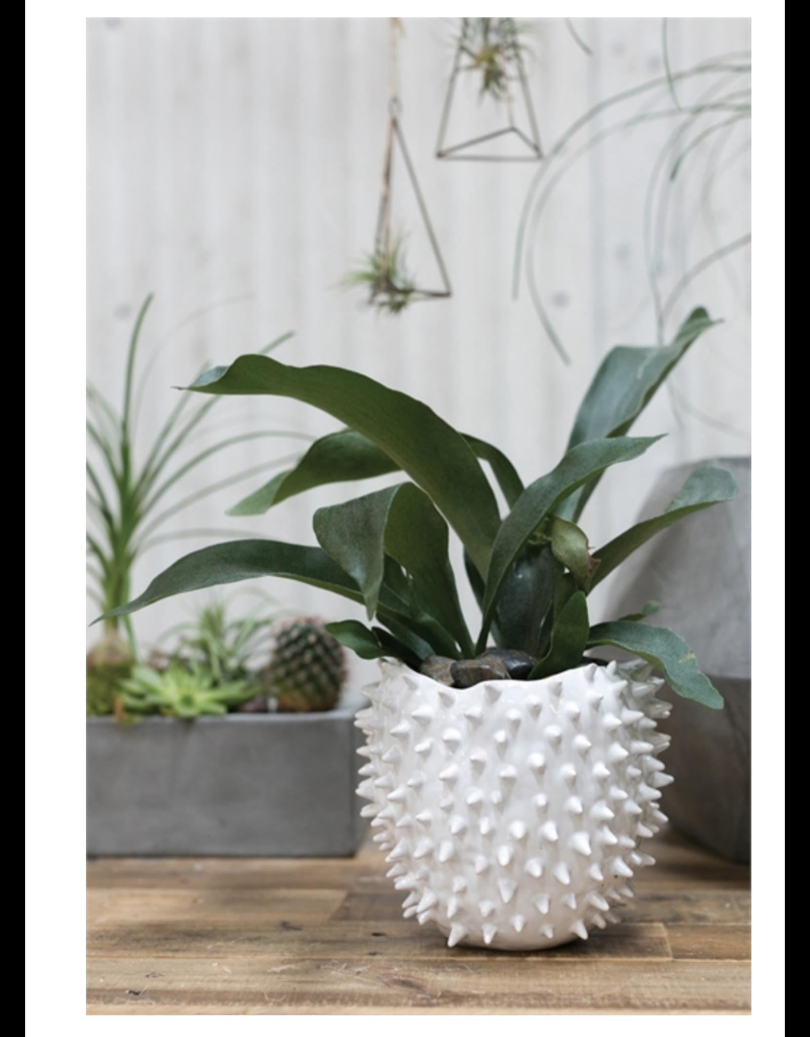 "Cacti Pot 5.5"" x 4"" White"