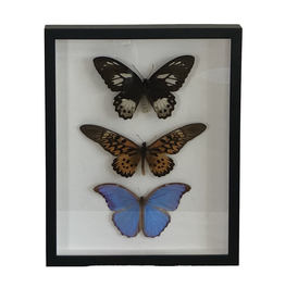 """Butterfly Artwork with Frame (12"""" x 13.5"""")"""