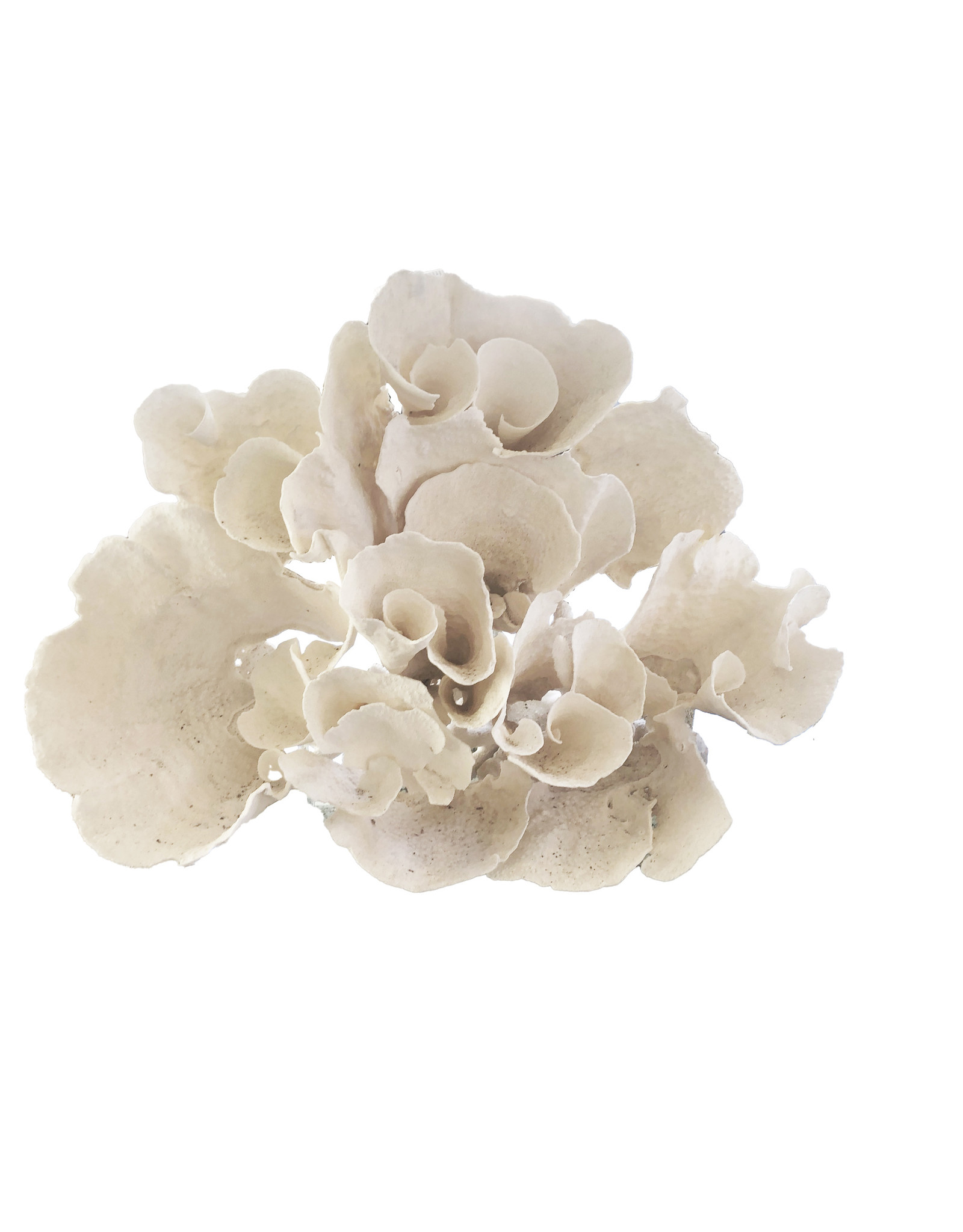 Large Organic Cup Coral