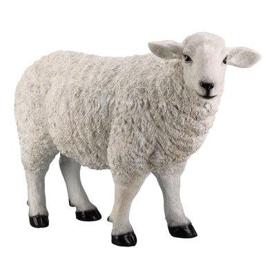 BAA BAA WHITE SHEEP