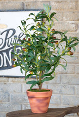 Handcrafted Potted Olive Topiary