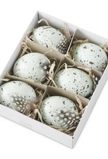 5.25 Inch Box of 6 Speckled Blue Eggs Mixed With Bird Feathers