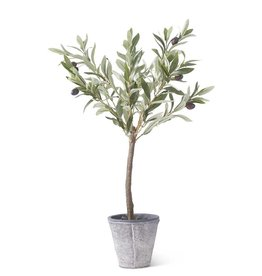 24 Inch Olive Tree w/Gray Wash Pot
