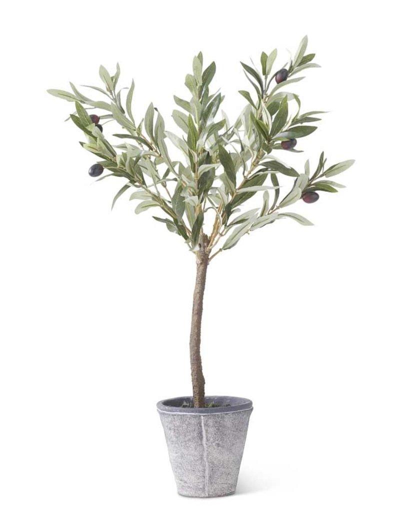 24 Inch Olive Tree w/Gray Wash Pot