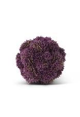 4 Inch Dark Purple Sedum Ball