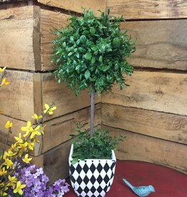 """20"""" Boxwood Ball Topiaries in Harlequin Square Pots"""