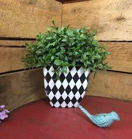 8.5 Inch Boxwood in Harlequin Square Pot