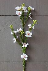 Waxflower Stem Bush