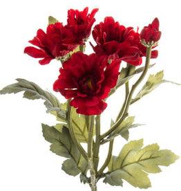 Deep Red Botanic Daisy