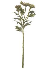 Gray Green Daisy