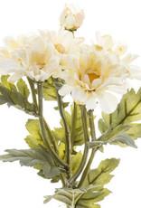 Cream Botanic Daisy