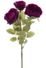 Plum Diana Tea Rose Stem