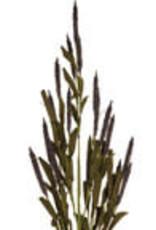 Purple Botanic Mini Cattail Stem
