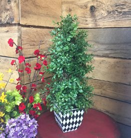 18 Inch Boxwood Topiary in Harlequin Square