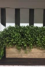 "K & K Interiors 18"" Rectangular Boxwood in Natural Wood Container"