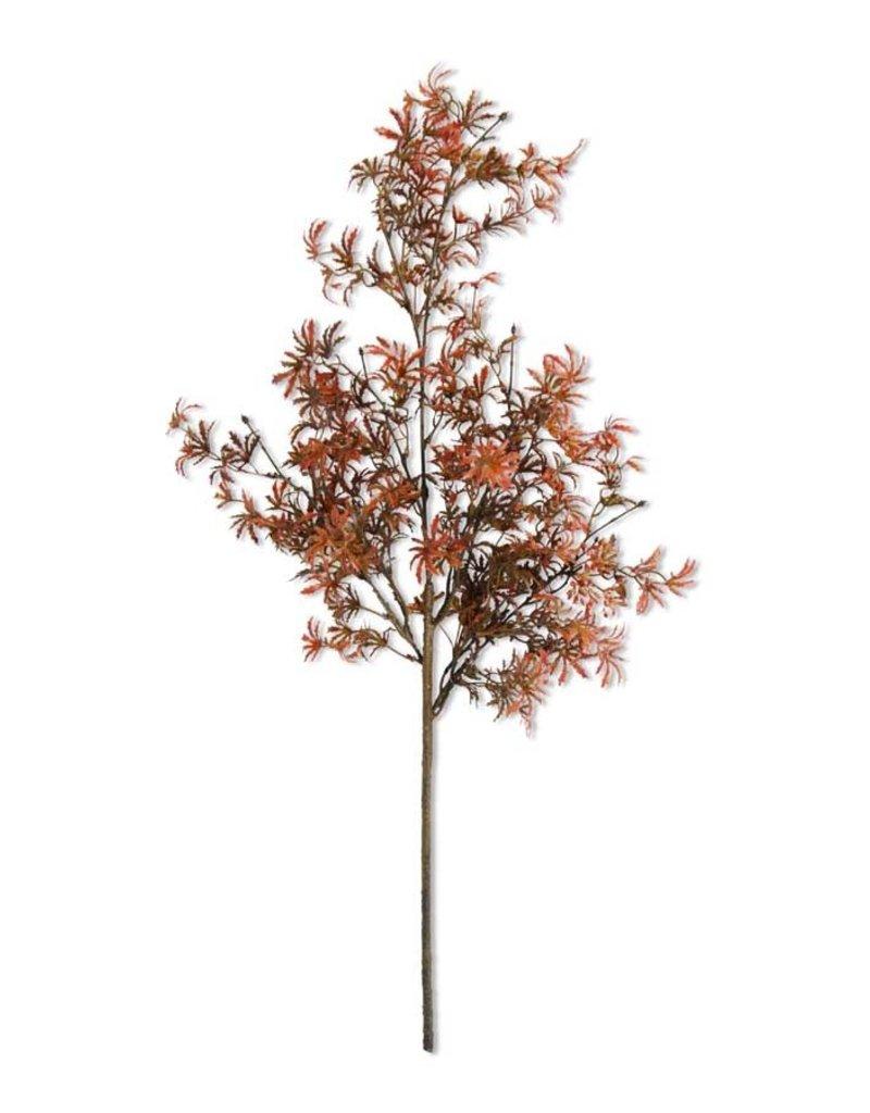 30 Inch Fall Japanese Maple Stem
