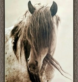 Freedom Canvas Horse Picture 27x39