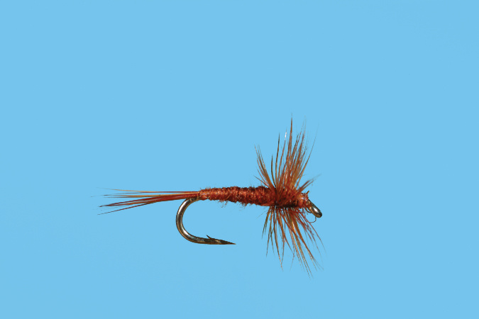 Solitude Fly Midge Adult