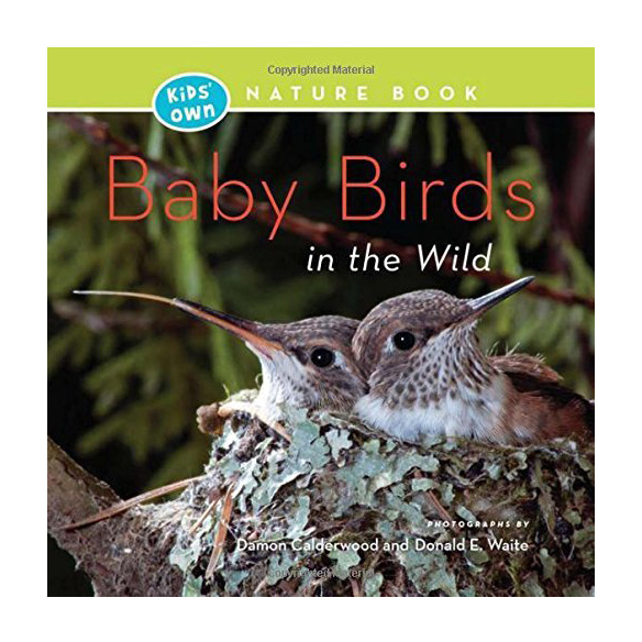Kids' Own Nature Books: Baby Birds in the Wild
