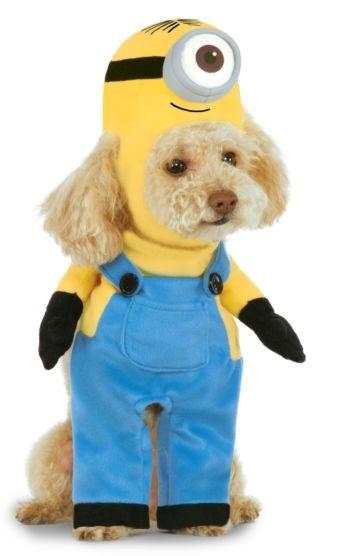 Rubies's Pet Shop Rubie's Pet Minion Stuart Costume XS Product Image