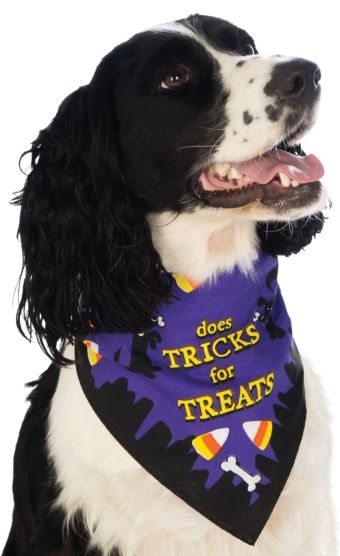 Rubies's Pet Shop Rubie's Pet Shop Tricks for Treats Bandana S/M Product Image