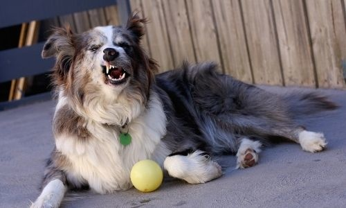 Detecting Allergies in Dogs
