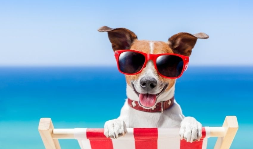 Cool Pet Tips for the Dog Days of Summer