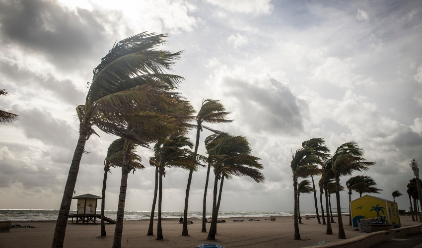 Keeping Pets Safe in a Hurricane