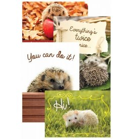 Lovable Hedgies