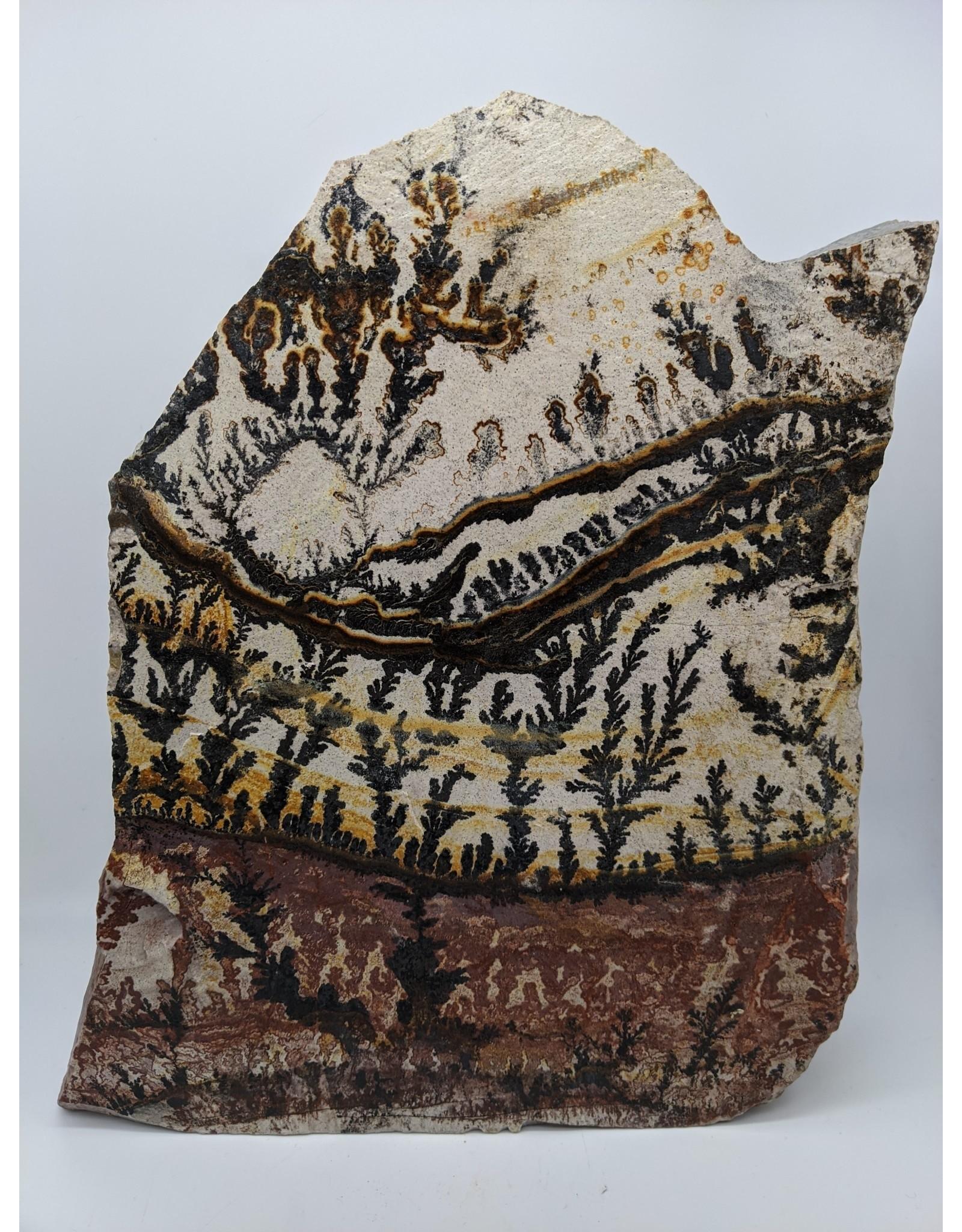 Dendritic Rhyolite, Manganese & Iron Oxide (Utah, USA)