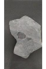 Fossil Trilobite Plate (Utah) Elrathia kingi