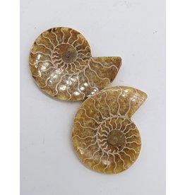 Fossil Ammonite (pair)