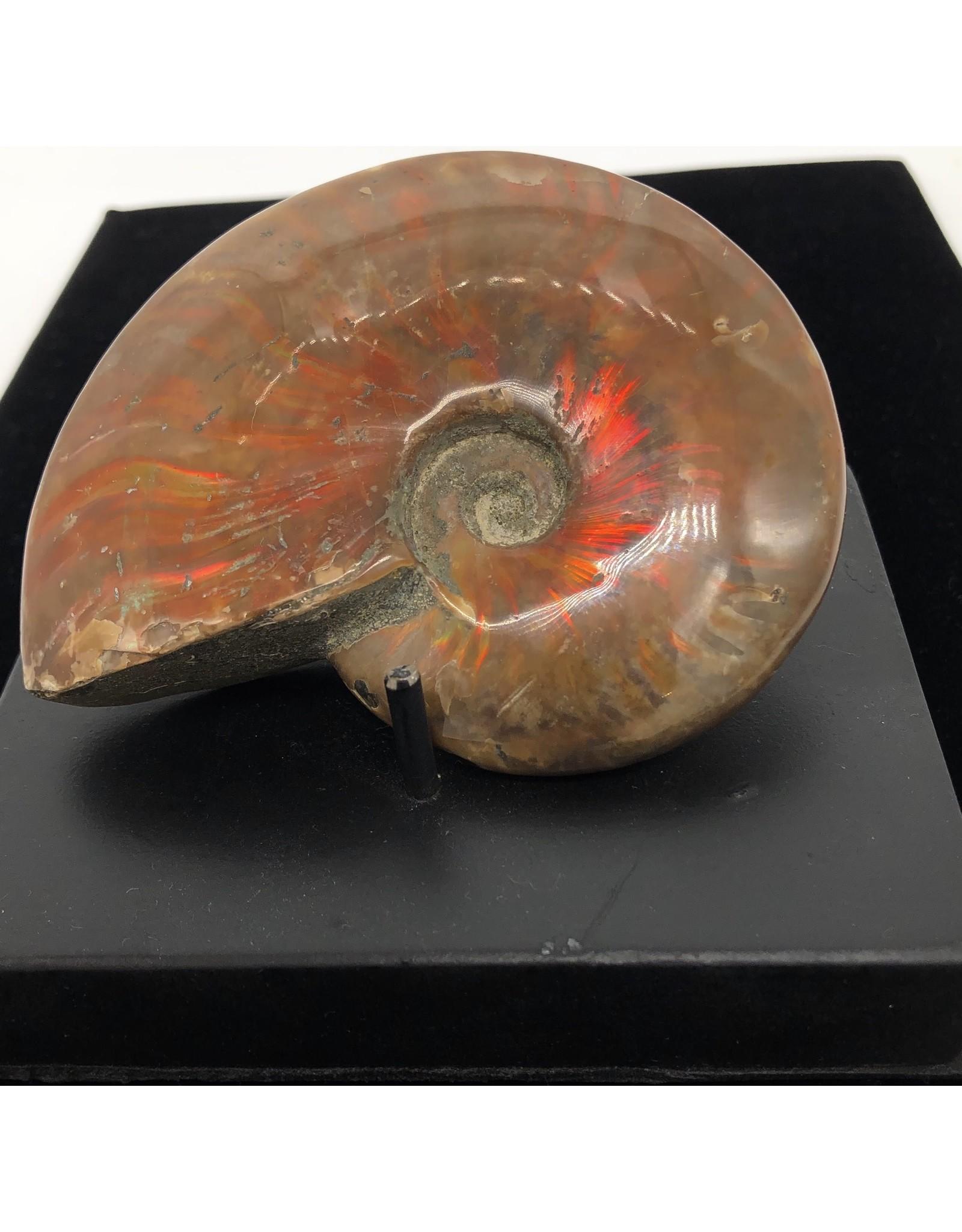 Large Red Ammonite (Madagascar)