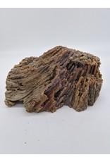 Fossil Coral (West Fl) 25-38 MYA