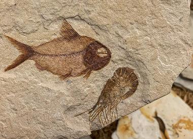 Aquatic Specimens