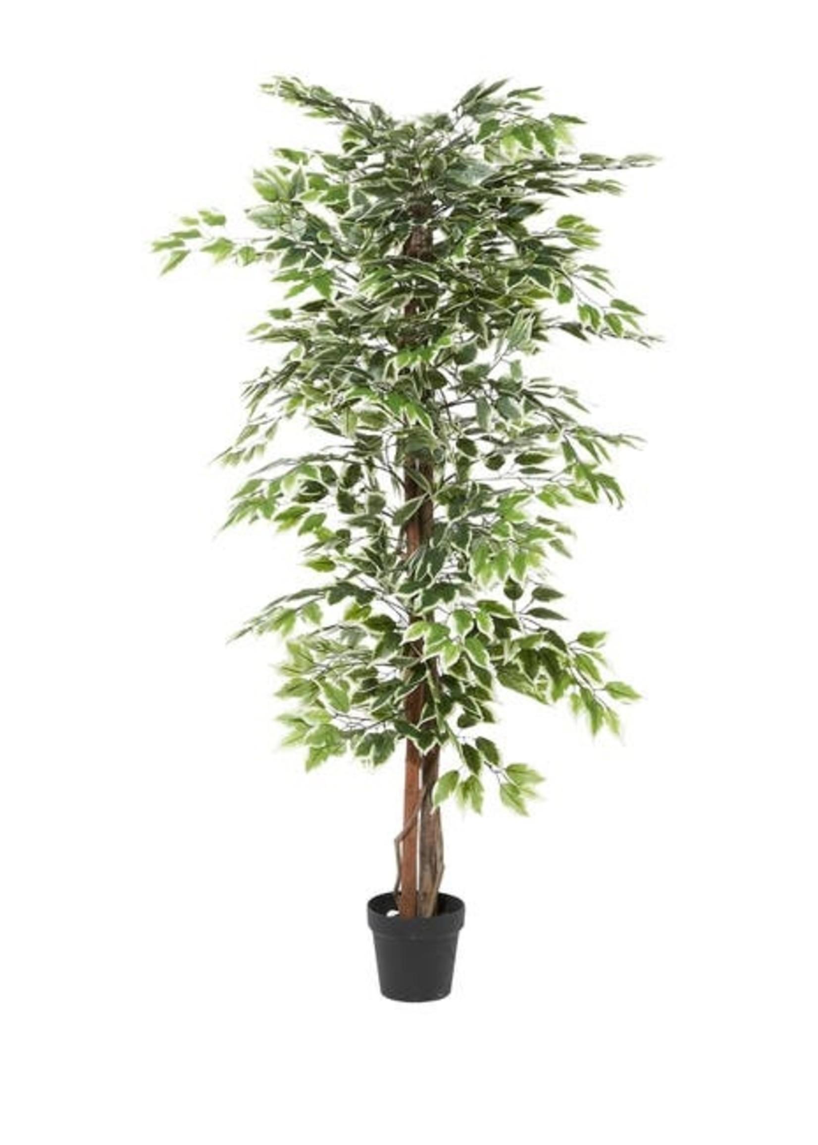 UMA ENT. INC. 88287 ARTIFICIAL FICUS TREE IN POT 73'H