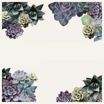 Desert Bloom Placemats Set of 30