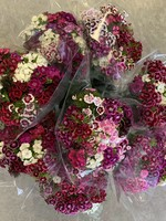 Heritage Heritage Flower Bouquet (Sweet William)