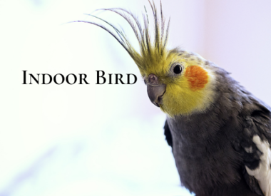 Indoor Bird