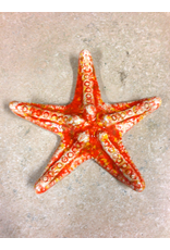 True Art STARFISH (Md) TRUA