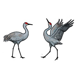 Jabebo Earrings CRANE (SANDHILL)