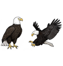Jabebo Earrings BALD EAGLE