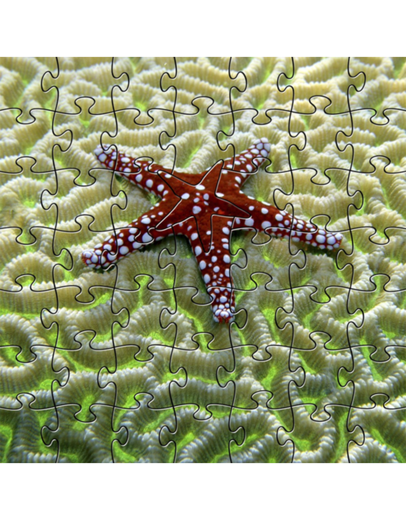 Zen Art & Design Starfish on Brain Coral (Teaser, 49 Pieces, Artisanal Wooden Jigsaw Puzzle)