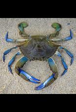 Zen Art & Design Blue Crab (Teaser, 50 Pieces, ZEN Wooden Jigsaw Puzzle)