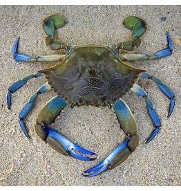 Zen Art & Design Blue Crab (Teaser, 50 Pieces, Artisanal Wooden Jigsaw Puzzle)