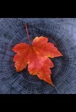Zen Art & Design Circles of Life (Teaser, 50 Pieces, ZEN Wooden Jigsaw Puzzle)