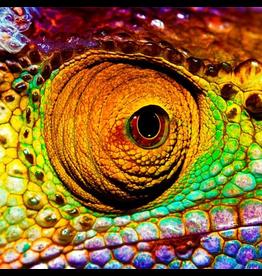Zen Art & Design Chameleon (Teaser, 50 Pieces, ZEN Wooden Jigsaw Puzzle)
