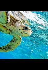 Zen Art & Design Sea Turtle 2 (Sm, 126 Pieces, ZEN Wooden Jigsaw Puzzle)