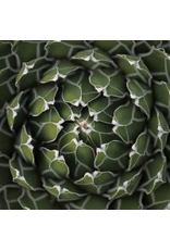 Zen Art & Design Agave (Sm, 126 Pieces, Artisanal Wooden Jigsaw Puzzle)